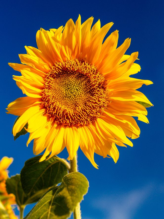 blossom-flora-flower-1214259
